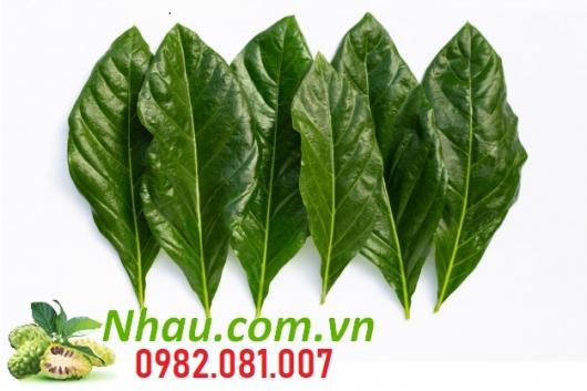 http://nhau.com.vn/uploads/useruploads/nhau_com_vn/la-nhau-la-cay-nhau.jpg