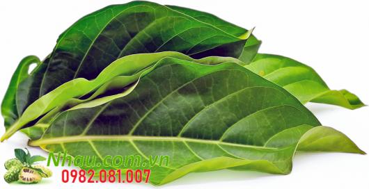 http://nhau.com.vn/uploads/useruploads/nhau_com_vn/noni-leaf.png